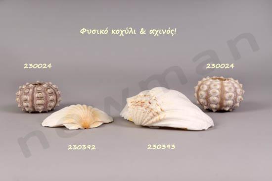 _DSC5384 koxyli 290219 230009 290218 230392 230393 axinos 230024 coded copy