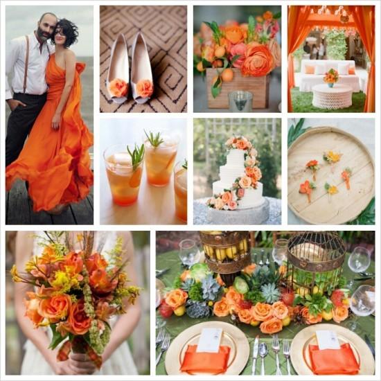 celosia orange 013