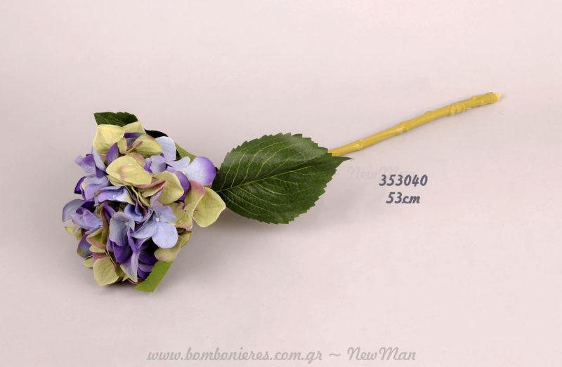 Ορτανσία μωβ-μπλε