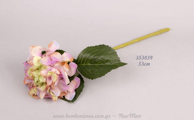 Ορτανσία ροζ-πράσινη