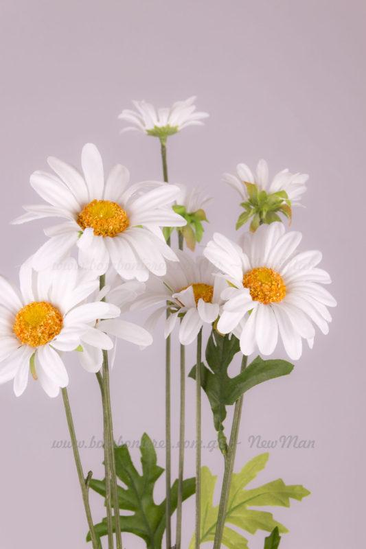 353061 Μαργαρίτες λευκές