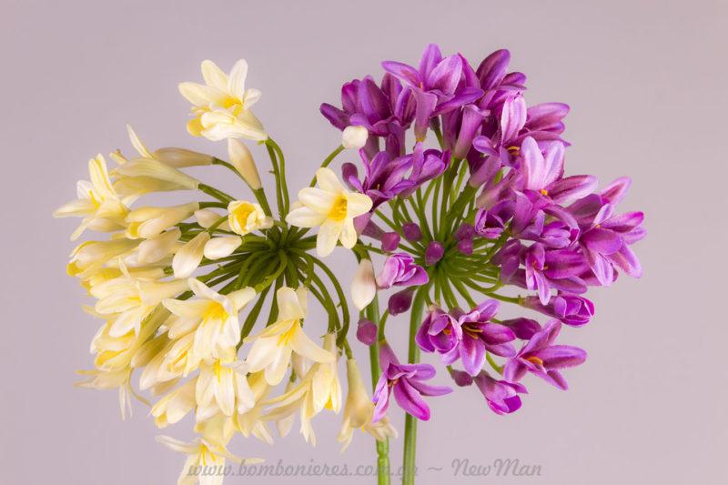 Τεχνητά άνθη Αγαπανθού